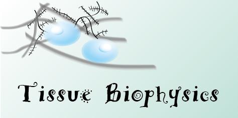 TissueBiophysics